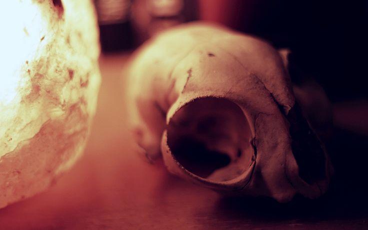 Réges-régen a telken talált macska koponya. Gazdájának eredete ismeretlen.