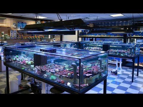 Best 20 tropical fish store ideas on pinterest for Exotic fish store