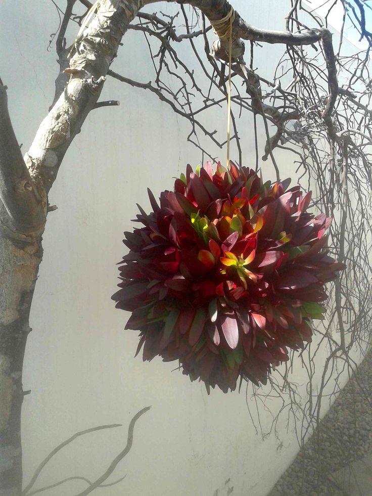 Esfera de proteas colgantes.