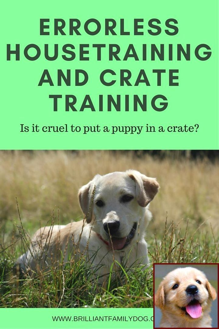 1 Have Dog Behavior Problems Learn About House Training A Puppy At Night And Dog Training Classes How Much Dog Behavior Dog Training Near Me Dog Training Techniques