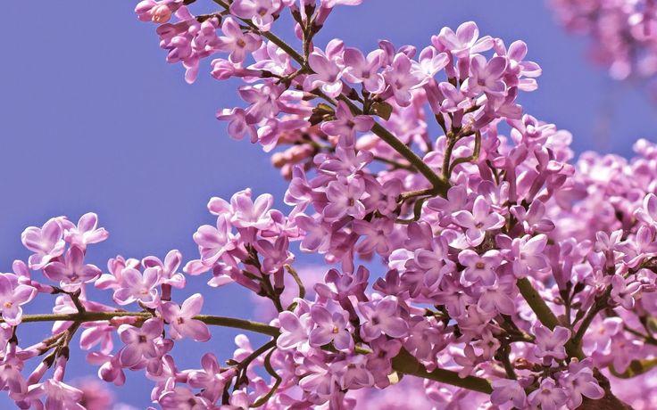 e-Pontos.gr: Απρίλτς - Η παράδοση τον μήνα Απρίλιο στον Πόντο