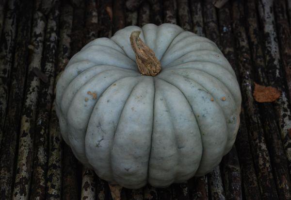 ~*- Gresskar -*~ (Amariel of the Woodlands) My blue fairytale pumpkin! October 2014