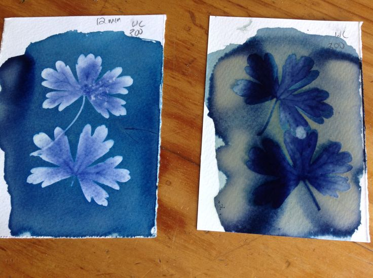 Cyanotypes after and before washing