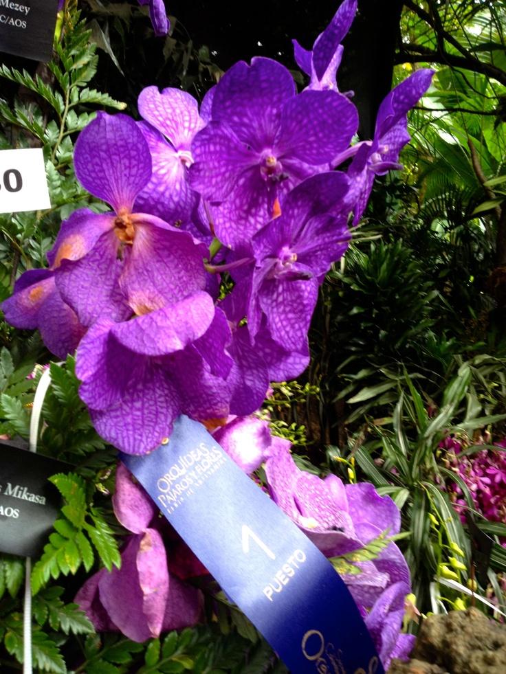 El evento Orquídeas, Pájaros y Flores estuvo presente en el Jardín Botánico del 3 al 7 de agosto.