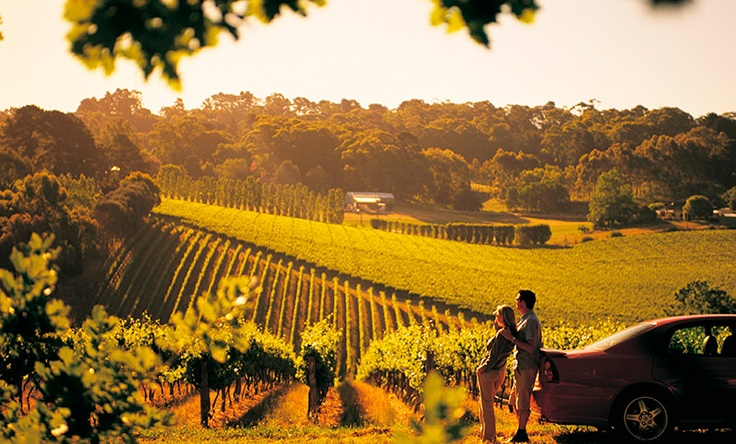View over the vineyards, Adelaide Hills