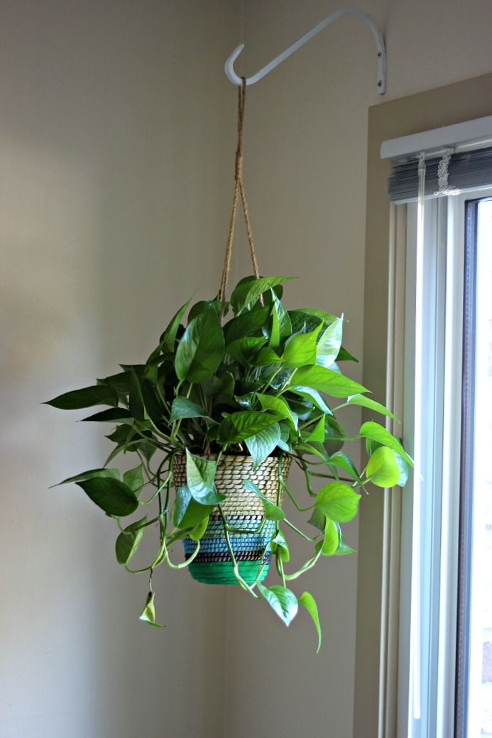 Best 25 Hanging Wall Planters Ideas On Pinterest