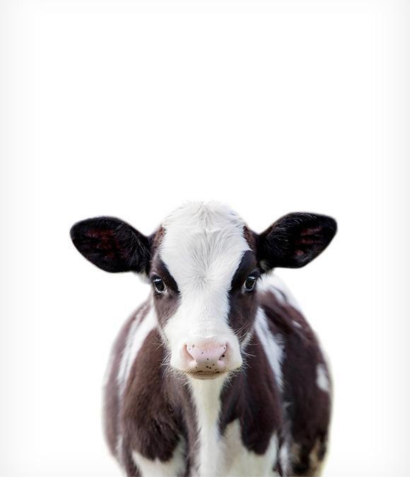 Baby cow printable art