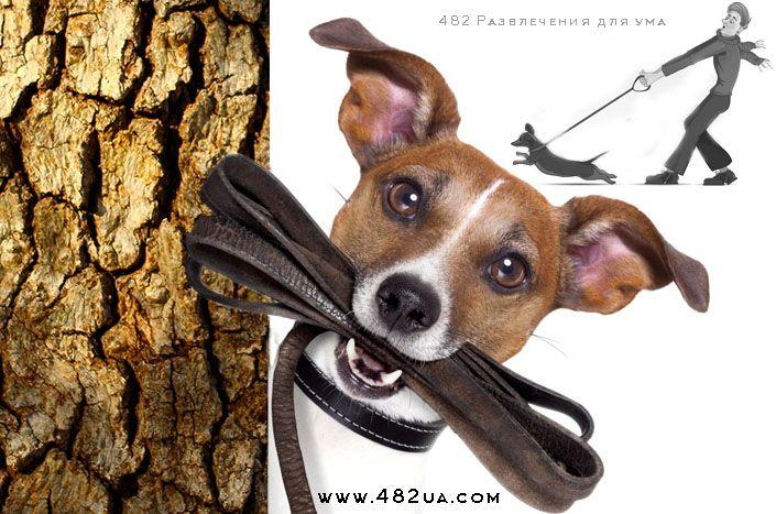 Собака друг человека  пора заменять утренние прогулки на пробежки (в мире животных)