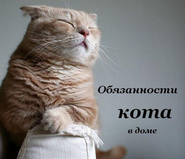 Обязанности кота по дому 🐱 / Западло