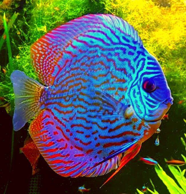 Pin On Aquarium Freshwater Fish Tips