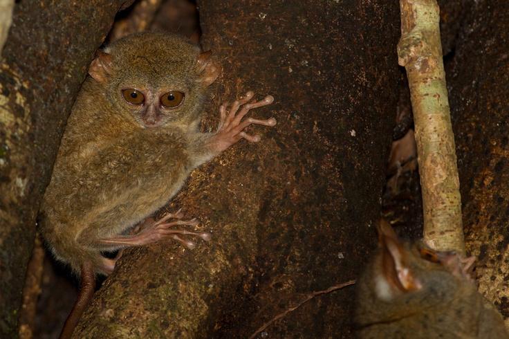 Indonesia - Sulawesi - Forest near Manado, more on www.PeschieraMarco.com