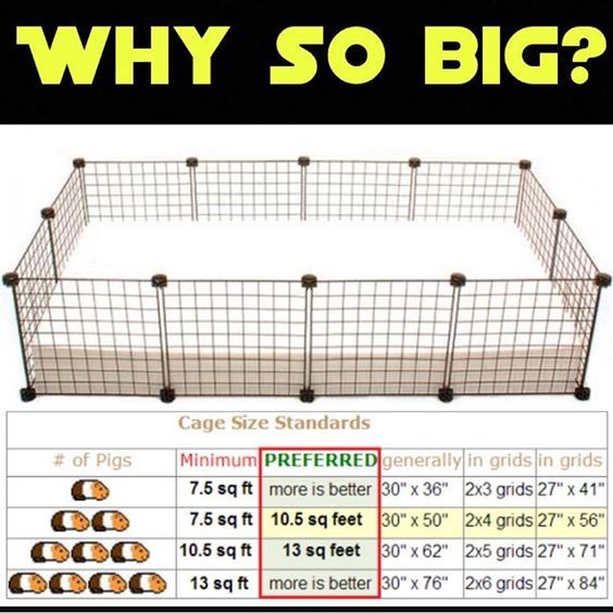 Bigger is better!!!! For the health and well-being of your guinea pigs, beyond the minimums, provide as large living area as you possibly can Many of the ready made cages sold in petstores are NOT suitable for guinea pigs-despite the fact they are adverti