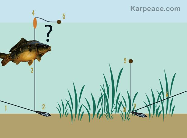 Big Zig The Rig : Montage zig rig carp fishing pinterest rigs and montages