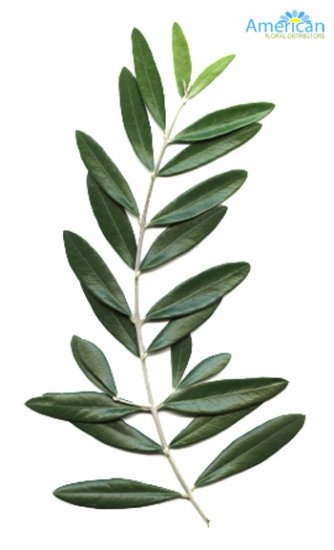 Olive Branches / ByThe Bunch - Click Image to Close supplies $16