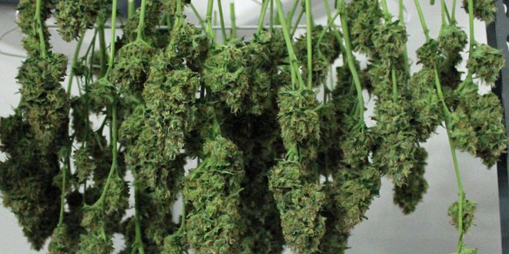 29 Tips For Growing The Best Marijuana In America