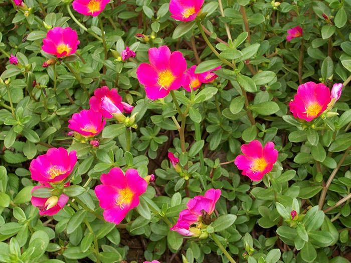 Onze Horas, a felicidade em flor! | Jardim do Coração