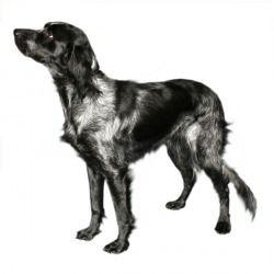 L'Epagneul Bleu de Picardie è  un cane specializzato nella caccia agli uccelli acquatici in palude e nei terreni umidi. Perfetto, quindi, su questi tipi di terreni. Riesce, però, ad adattarsi bene anche ad altri tipi di terreno. Molto veloce e reattivo, con un'eccellente esplosività muscolare. Mostra molto attaccamento al proprio padrone e a coloro che considera amici.
