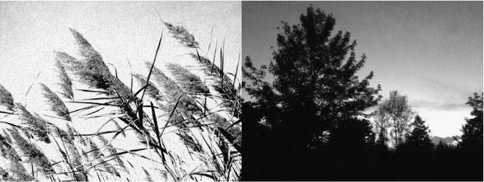 Madreterra | Immagini ispiratrici | Canne al vento | Un albero familiare.