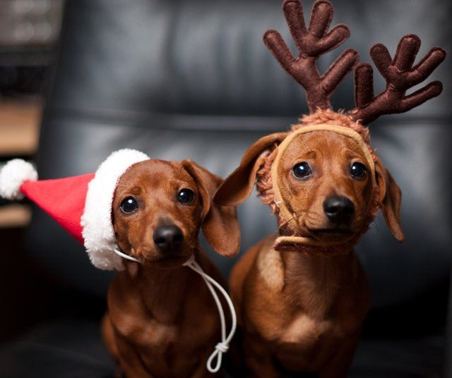 So cute. I should have gotten some antlers for my dog Lady too.