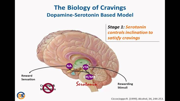 nucleus accumbens dopamine - biology of cravings