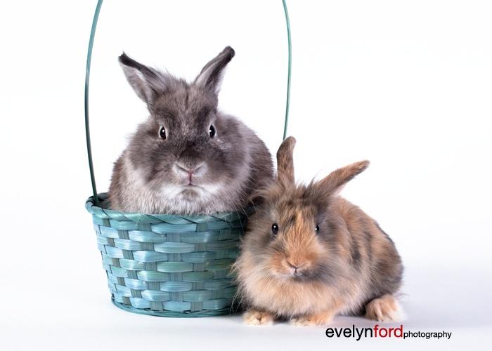 Bunnies Einstein and Harley at Easter - Einstein temporarily lost his mane