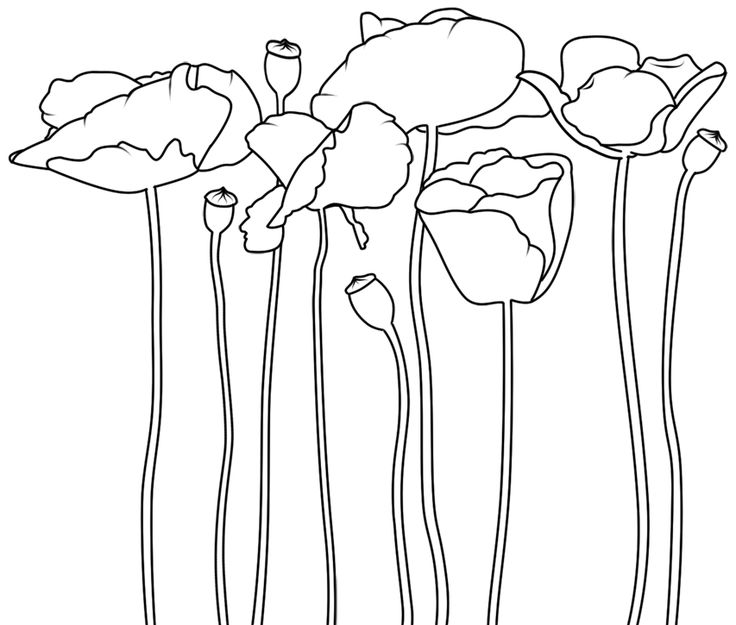 Poppies digital image -- free from Birds Cards #free #digi #download