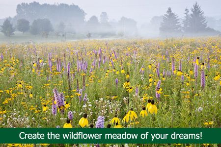 Wildflower Farm, where I can get native seeds.