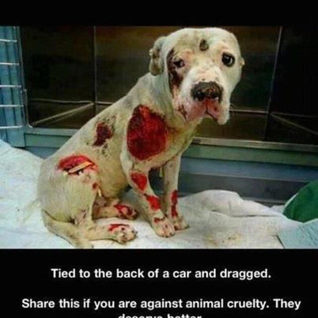 Please Pin/Share if you're against animal cruelty! The real animal is the person that committed such a horrific act on this sweet dog. A heartless piece of garbage of a human did this! People that do this, can, do & will do this to children. For all those who die in the dark, you have my love & hopes it will not be in vain. If you suspect any animal cruelty, please speak up; you can be that voice that helps stop such tragic acts of abuse. Every minute, a animal is abused by another coward.