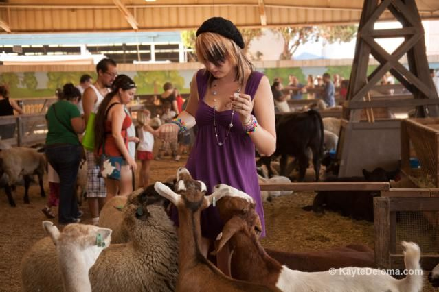 From Livestock to Side Shows and Wonders of the World, it's all at the LA County Fair: City Meets Country at the LA County Fair