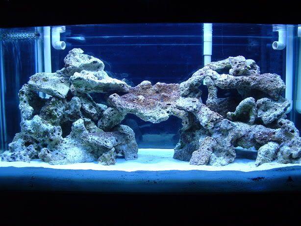 1000 images about aquariums on pinterest saltwater for Landscaping rocks for aquarium