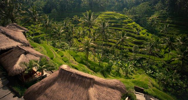 Wonderful Indonesia - The Subak: Bali's Rice growing Cultural Landscape: a UNESCO World Heritage