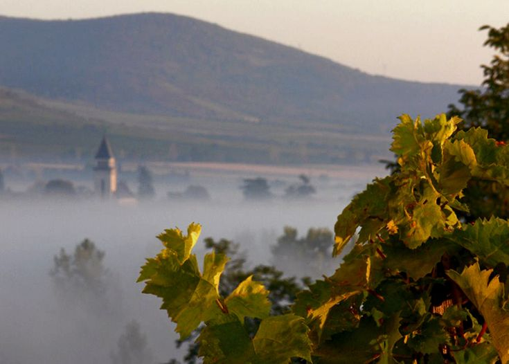Tokaj in Hungary #wine