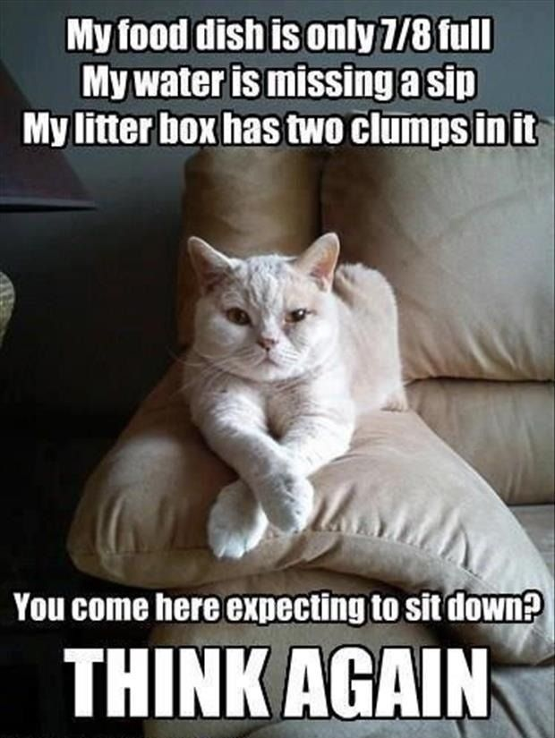 """This is often my cat's attitude."""