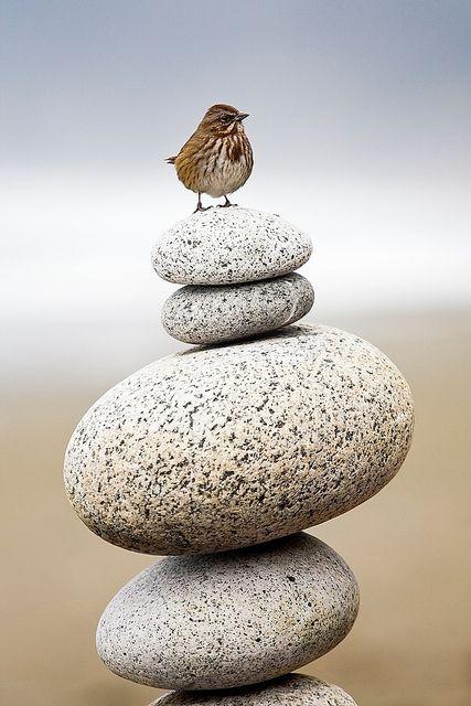 **Zen in nature: On the top ;)