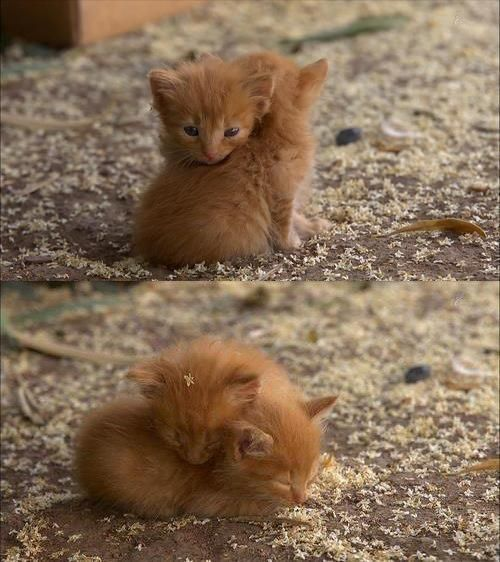 Tiny Gingers!