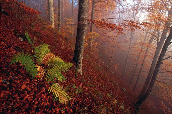 Foresta del Cansiglio http://www.alpagocansiglio.eu/it/sport-e-natura/natura-in-alpago