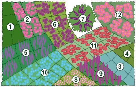 Pflanzplan des Schmetterlingsbeets