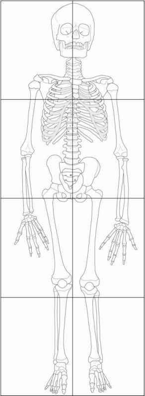 Invaluable image within printable human skeleton to assemble