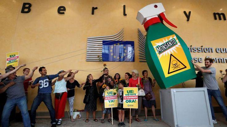 VIDÉO - La Commission européenne relance les discussions sur l'autorisation pour 10 ans de l'herbicide controversé.