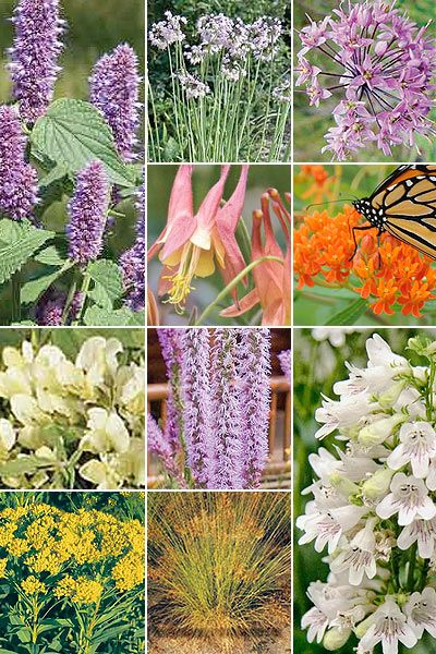 Pre Planned Flower Garden Designs: 32 Best Native Plants For Midwest Images On Pinterest