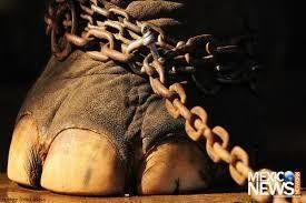 December 2016 Petition · The Governmement : stop animals in entertainment · Change.org #AnimalRights