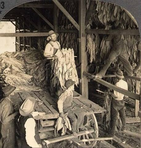 tobacco history 1961: history: the tobacco institute stages a celebration of the 350th anniversary of america's first tobacco crop the festival features pocahontas and a cigar-smoking john rolfe.