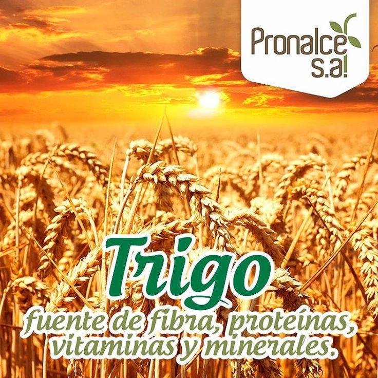 ¿#SabíasQue del trigo se aprovecha todo como unidad o bien por separado? La cáscara es excelente proveedor de fibra, proteínas, vitaminas y minerales y puede mezclarse con diversos jugos de frutas y verduras, o bien ser ingrediente de panes, pastas o galletas.    #Pronalce #Avena #Wheat #Trigo #Cereal #Granola #Fit #Oats #ComidaSaludable #Yummy #Delicious #Tasty #Instagood #Delicioso #Sano #HealthyFood #Breakfast #Protein #Nutrición #Cereales