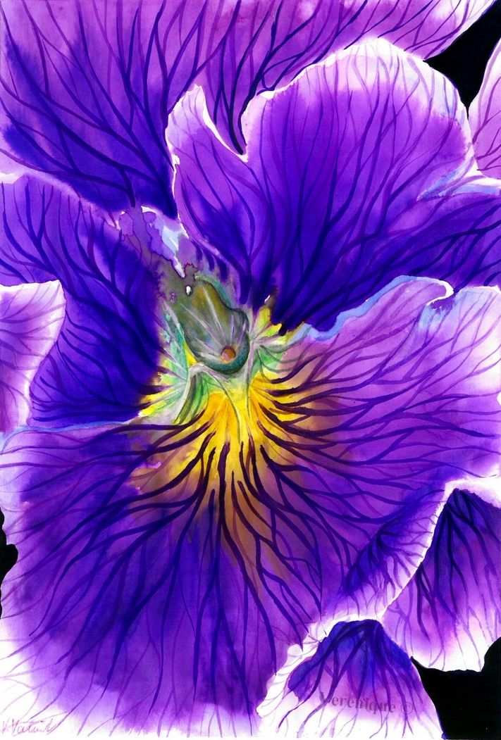 Pansy by Verenique