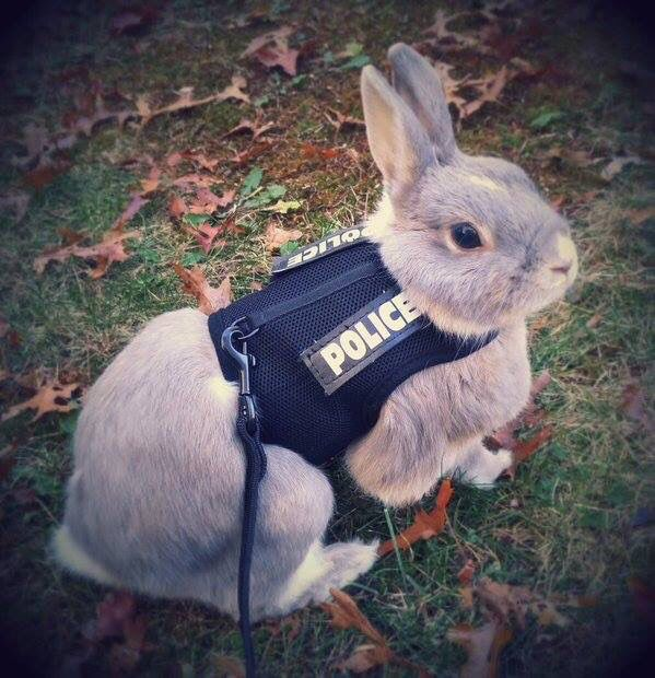 The cutest badge bunny I've ever seen. Haha