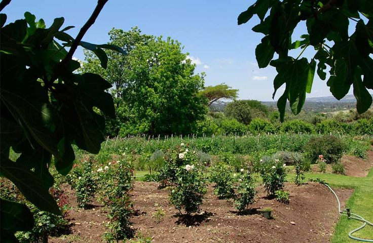 Our cafe shop & organic farm in Joburg South Africa