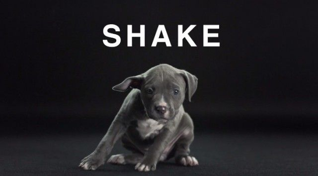 Shake with Dogs8