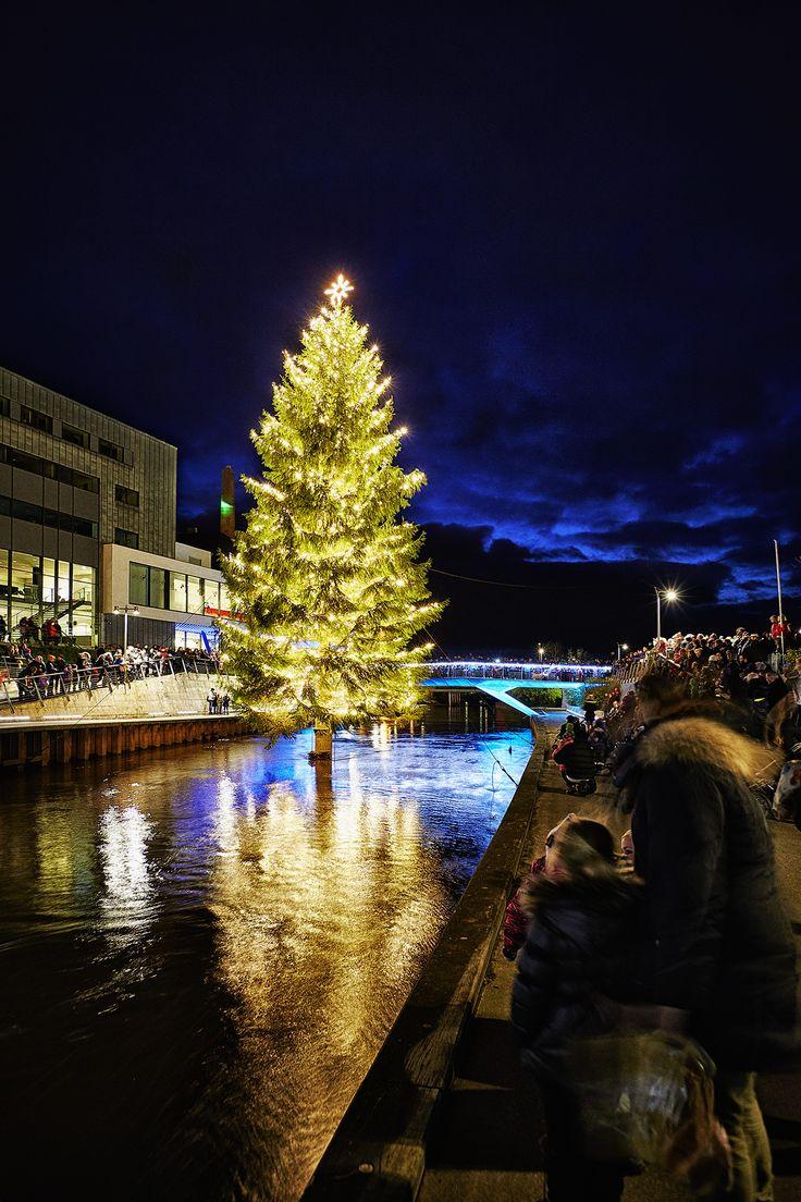 Årets smukke juletræ i Storaaen bag Musikteatret i Holstebro 2014. Foto: Ole Mortensen