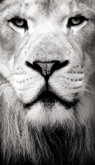 I love the Lion ... he represents so much!!