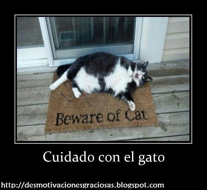 Gato seguridad ya en venta | frases graciosas | Pinterest